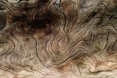 Free Tree Lines Abstract Background And Texture Of A Smooth Rounded Nature Stock Image - 130247661