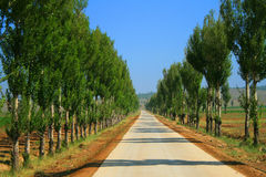 Tree lines pathway. In countryside in China Stock Photography