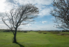 The tree at the links 3 Royalty Free Stock Images