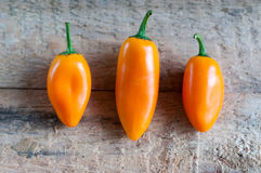 Tree little peppers. Tree little orange sweet peppers Stock Photography