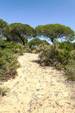 Tree located in the dunes Royalty Free Stock Photos