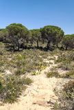 Tree located in the dunes Stock Images