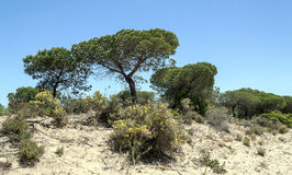 Tree located in the dunes Stock Photo