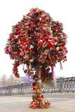 Tree with the locked wedding locks Royalty Free Stock Photography