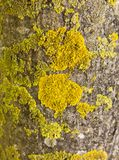 Log with moss. A tree log covered with moss Stock Image