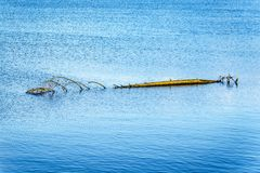 Tree Log floating in Pitt Lake near the town of Maple Ridge in the Fraser Valley of British Columbia. Full size tree log floating Pitt Lake near the town of Stock Image