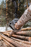 Tree log hydraulic manipulator Stock Image