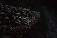Tree log with mushrooms Royalty Free Stock Photography