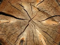 Tree log section. Cross section of an old tree log royalty free stock image