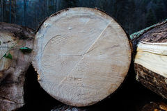 Tree Log Section Stock Photos