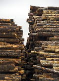 Tree Log Sections Laying Stacked Lumber Yard Sawmill Wood Storag Royalty Free Stock Photo