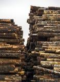 Tree Log Sections Laying Stacked Lumber Yard Sawmill Wood Storag Royalty Free Stock Photo