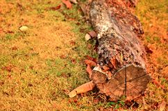 Tree Log Stock Photos
