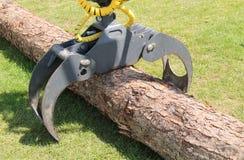 Tree Logger. Royalty Free Stock Photography