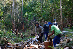 Tree loggers. Logging Bluegum trees for firewood Stock Photography