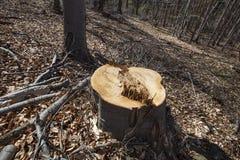Tree Logging Stock Photo