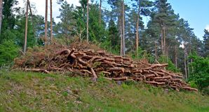 Tree, Logging, Biome, Forest stock image