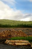 Tree Logging Lumber. Sustainable forest on Isle of Skye showing timber and logging of fir trees Stock Photos