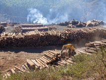 Tree logging in rural Swaziland with heavy machinery, stacked timber and forest in background, Africa