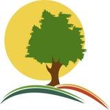 Tree logo Royalty Free Stock Photo