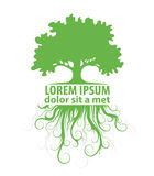 Tree logo template Royalty Free Stock Photos