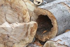 Tree/logs after being cut royalty free stock image