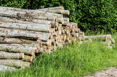 Tree logs Royalty Free Stock Images