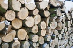 Tree logs detail Stock Image