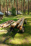 Tree logs Royalty Free Stock Image