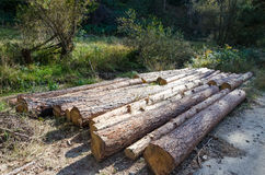 Tree logs Stock Images