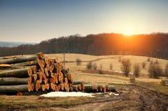 Tree logs near road Stock Photo