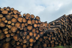 Tree logs piled up Royalty Free Stock Photo