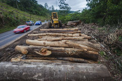 Tree Logs Road Vehicles Royalty Free Stock Image