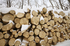 Tree logs with snow Stock Images