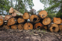 Tree Logs Stacked Wood  Stock Photo