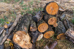 Tree logs. Stump stacked on the ground Stock Images