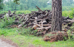 Tree logs Stock Photography