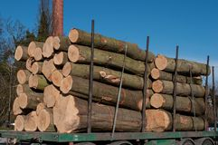 Tree logs on a trailer royalty free stock photo