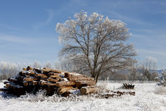 Tree and logs in winter. Royalty Free Stock Image