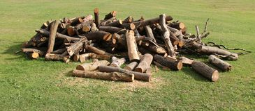 Tree Logs and Wood. Stock Images