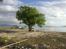 Tree in Lombok Royalty Free Stock Images