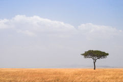 Tree. Lonely tree in the middle of the African savannah Stock Photo