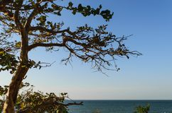 Tree lonely sea Stock Photos