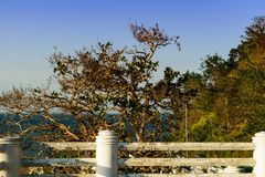 Tree lonely sea. Lonely sea thailand royalty free stock photography