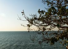 Tree lonely sea. Lonely sea thailand royalty free stock photos