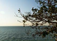 Tree lonely sea Royalty Free Stock Photos