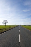 Tree and long road. Single tree over looking a long road that stretches out to the vanishing point royalty free stock photo