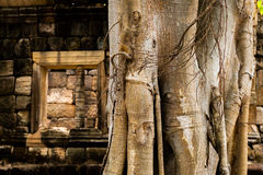 Tree look like elephant in the castle Royalty Free Stock Image