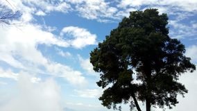Upright tree. This tree looks a one-man army against multitude of clouds waiting to battle stock images