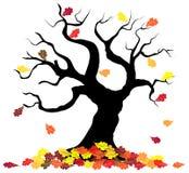 Tree loses fall foliage Stock Photography